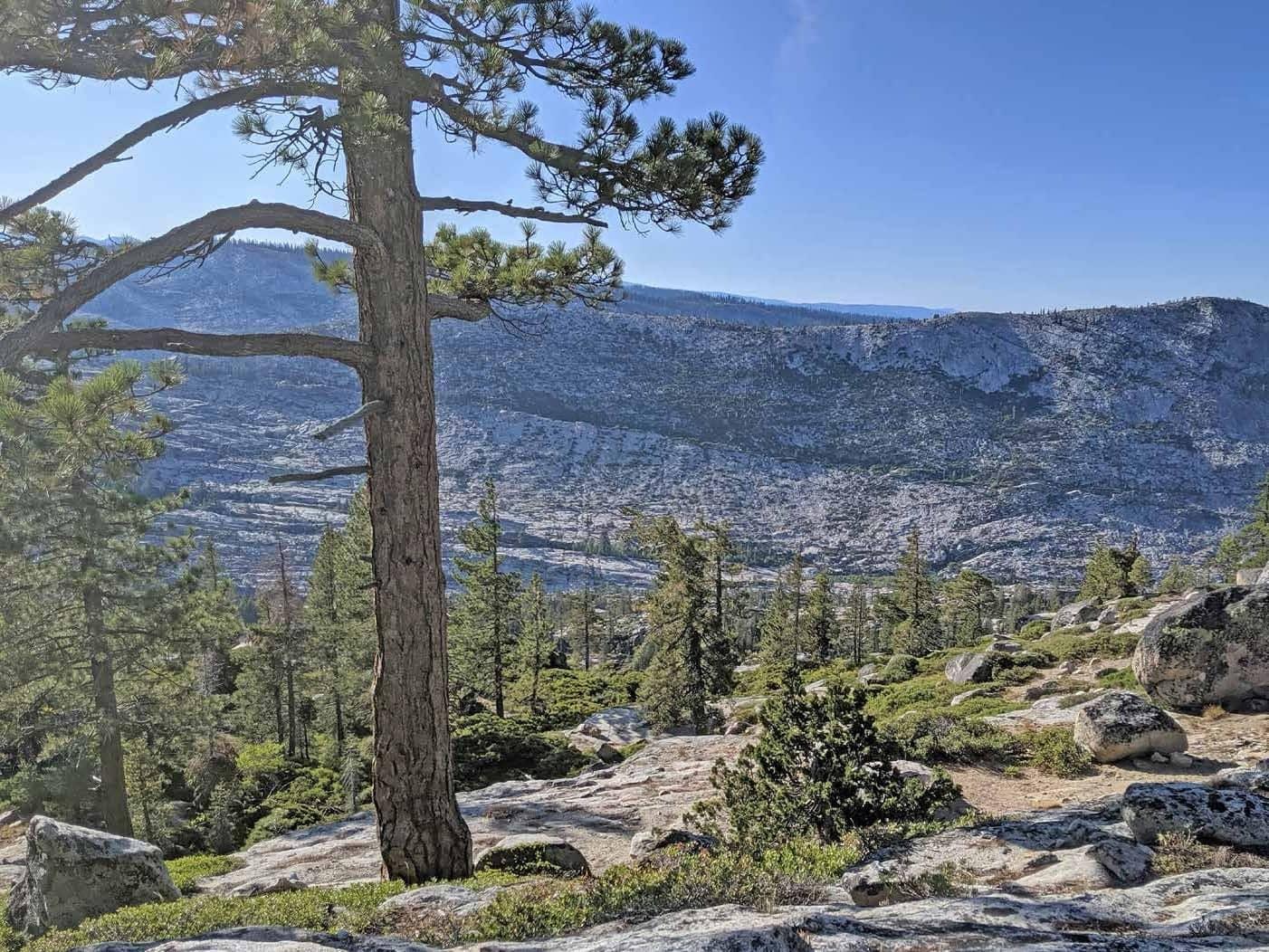 Granite-Ridge Bear