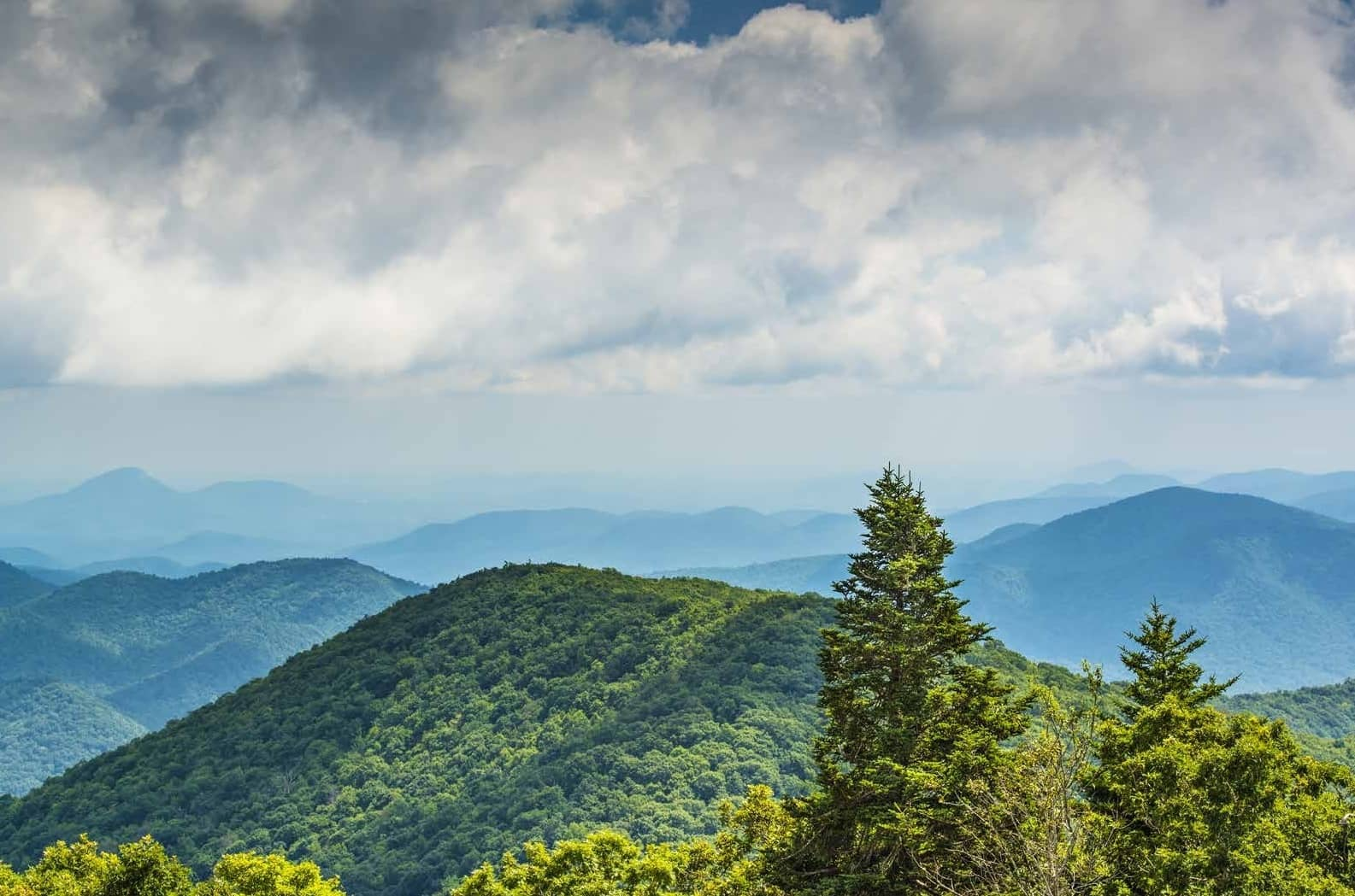 Bowhunting the Bears of the Blue Ridge Mountains