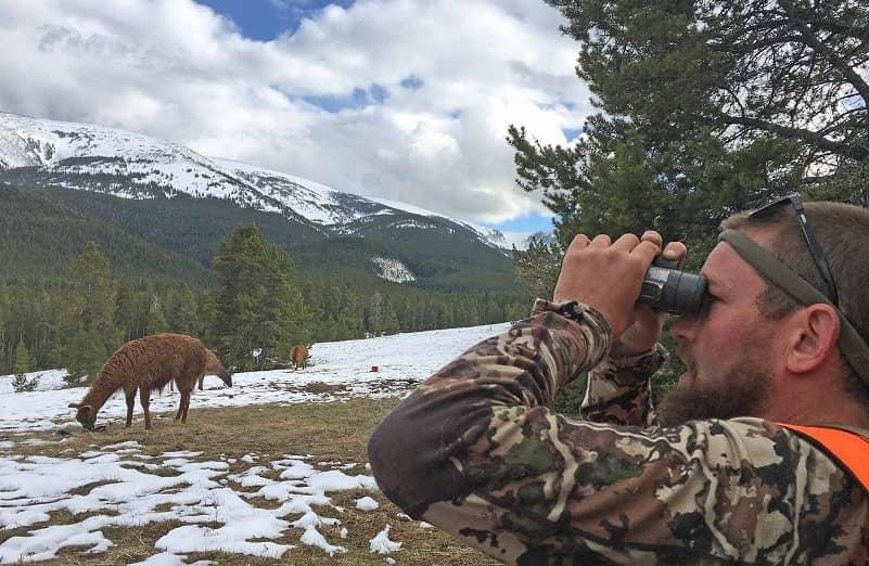 Hunting Bears using Llamas
