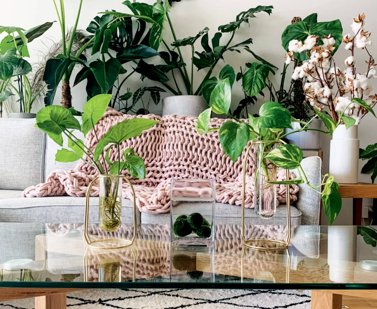 A Powerful Passion For Plants