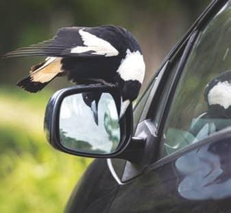 Birds Struggling To Be Heard