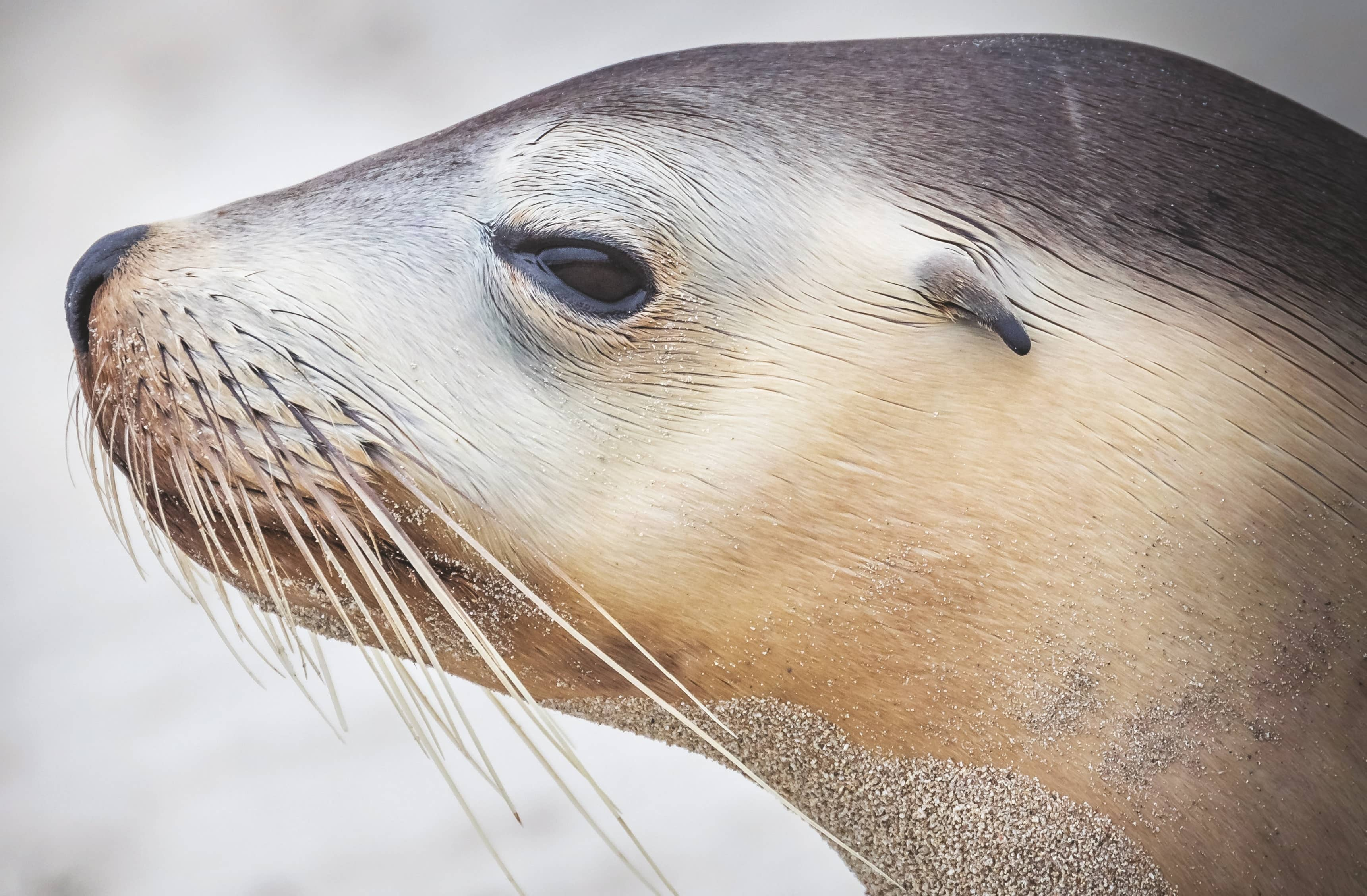 Saving Our Sea Lions