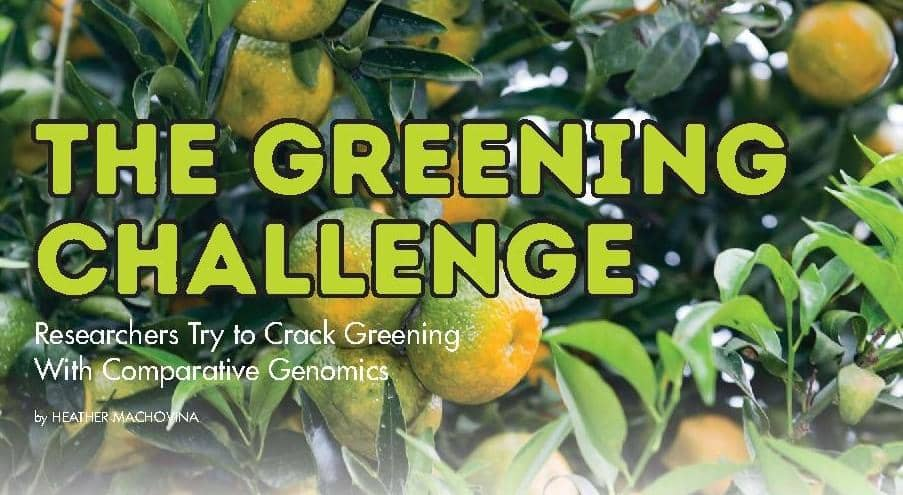 THE GREENING CHALLENGE