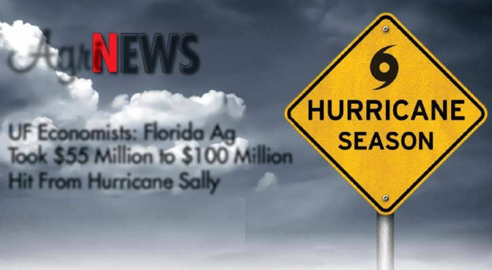 UF Economists: Florida Ag Took $55 Million to $100 Million Hit From Hurricane Sally