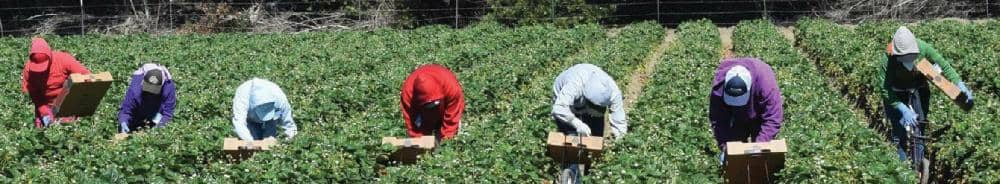 UF/IFAS Extension Helps Farmworkers Stay Safe From COVID