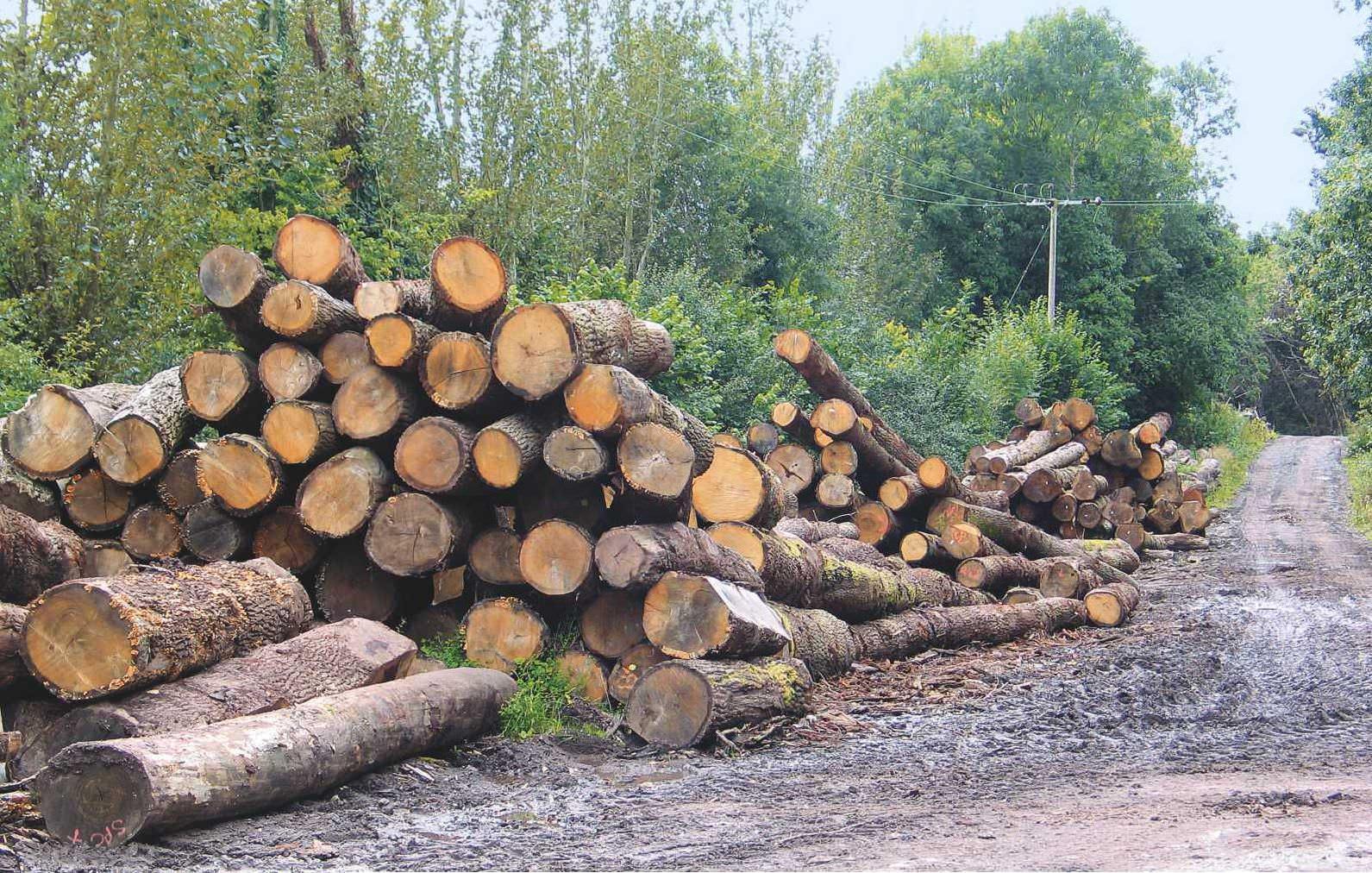 Converting Logs To Lumber