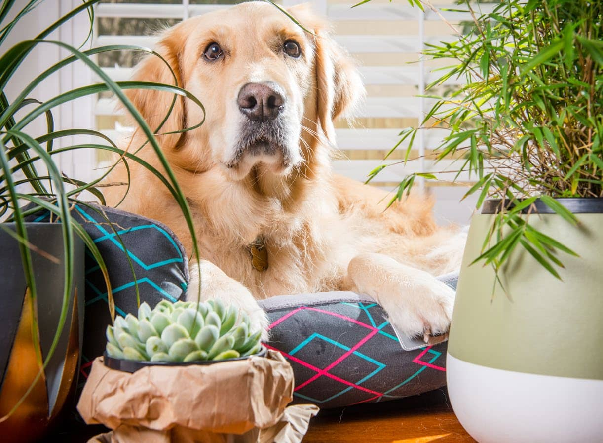 KEEPING YOUR PETS HEALTHY & HAPPY