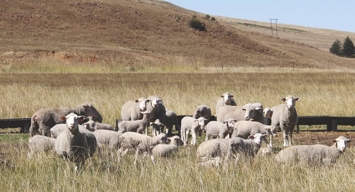 Nutrition For The Overwintering Of Small Stock: A Three-Phase Approach