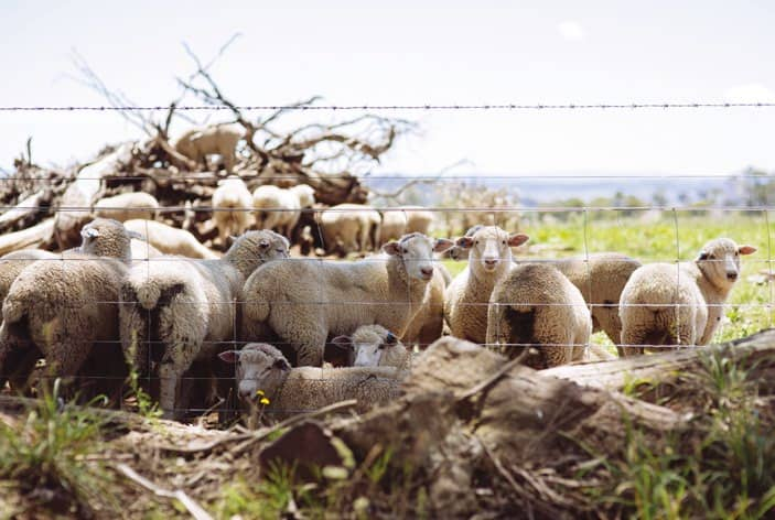 Livestock theft: The short end of the stick