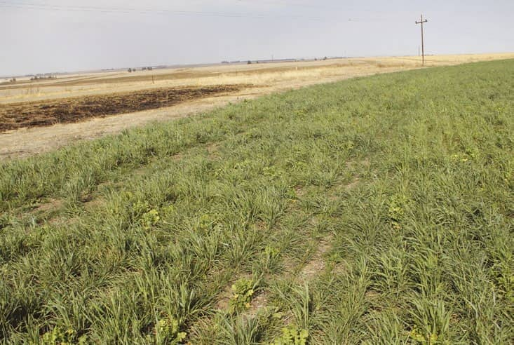 The versatility of cover crops