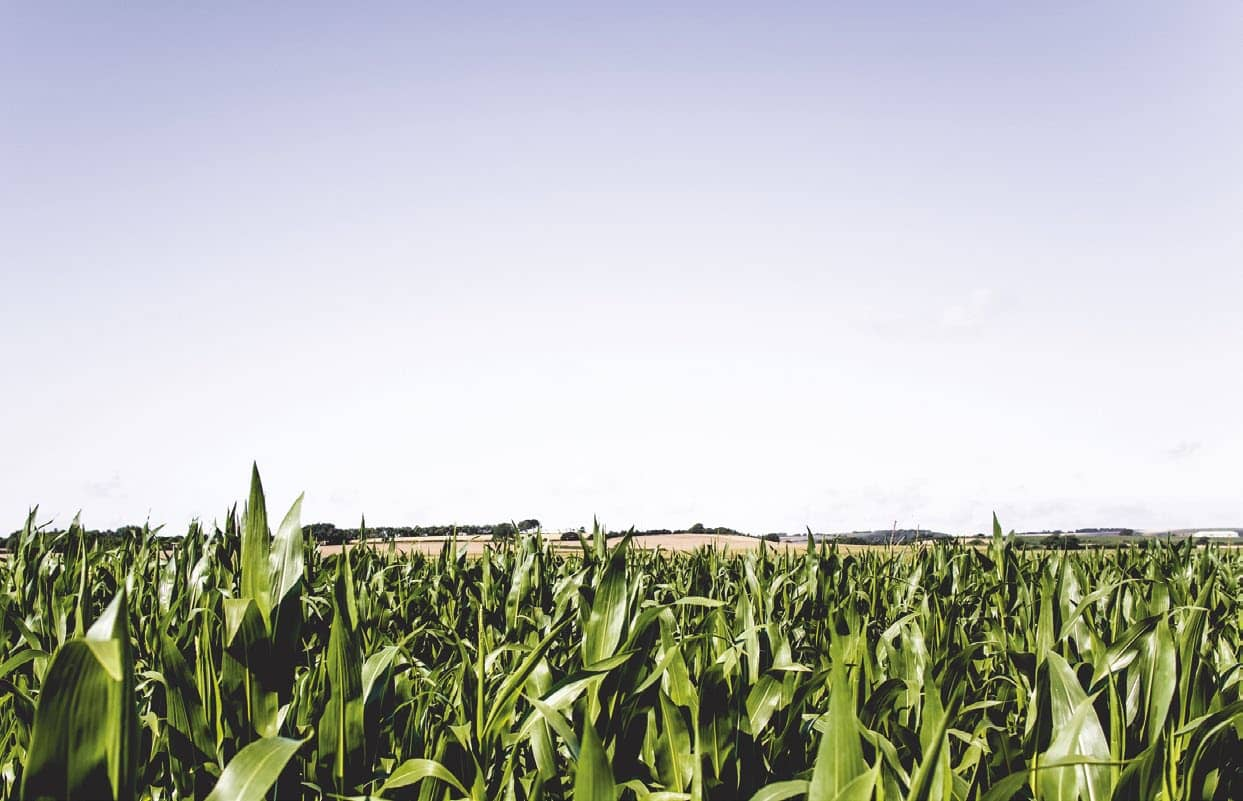 Conservation Agriculture Can Boost Maize Yields