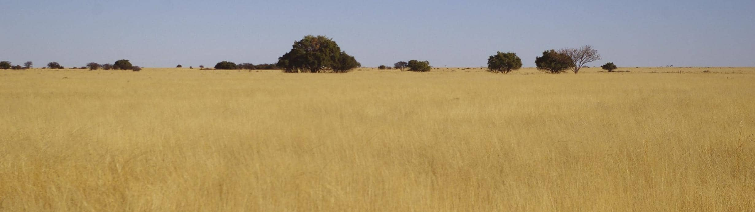 Analyse And Plan Before Investing In Cultivated Grazing