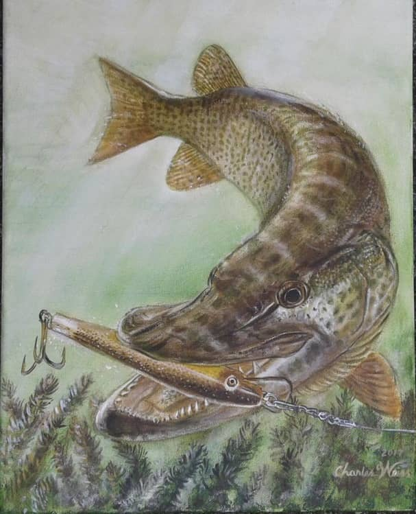 St. Lawrence River Muskies