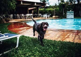 My Dog Jumps In The Pool Constantly