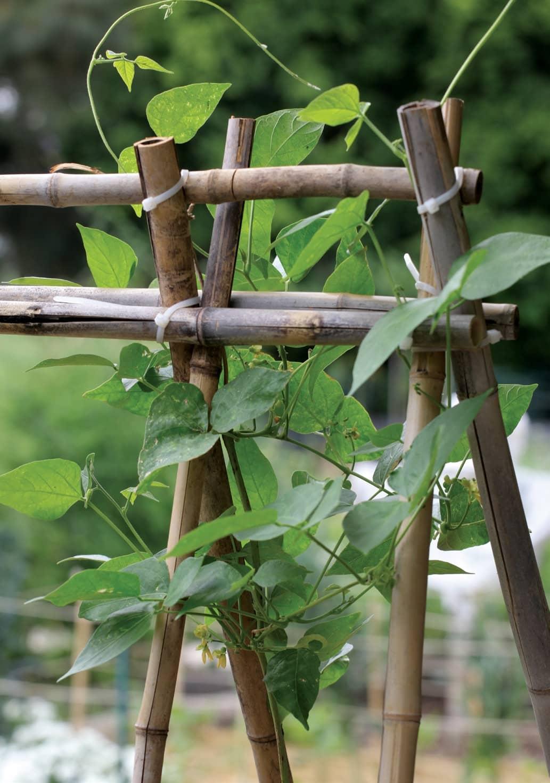 UPWARDS AND ONWARDS: vertical veggie growing