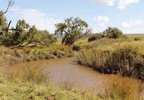 Riverbanks: An Important Aspect Of Veld Management