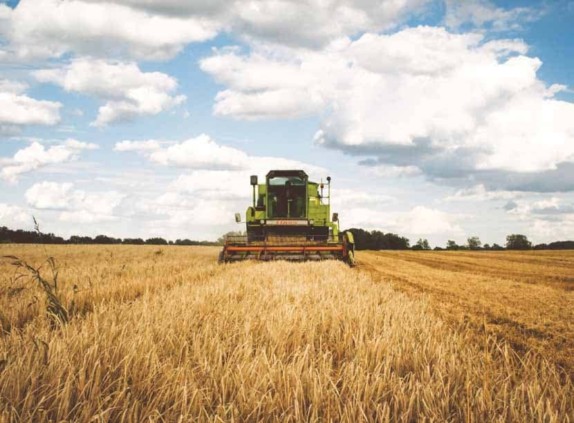 Examining Agriculture's Role In Labour-Intensive Growth