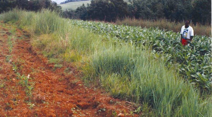 Conservation Agriculture Reduces Erosion And Improves Production