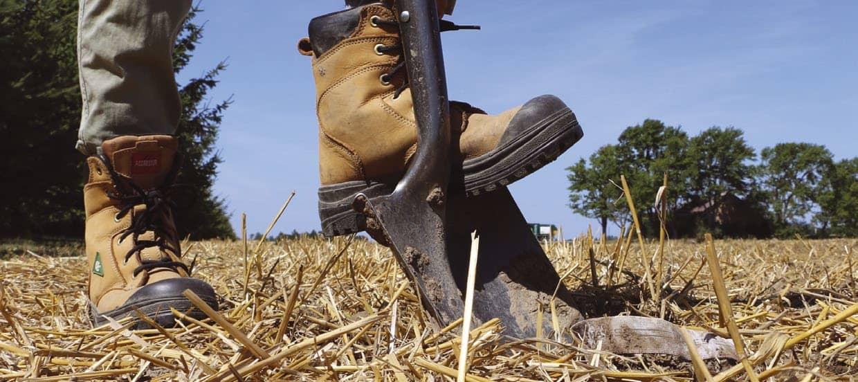 Invasive Plants And Soil Health