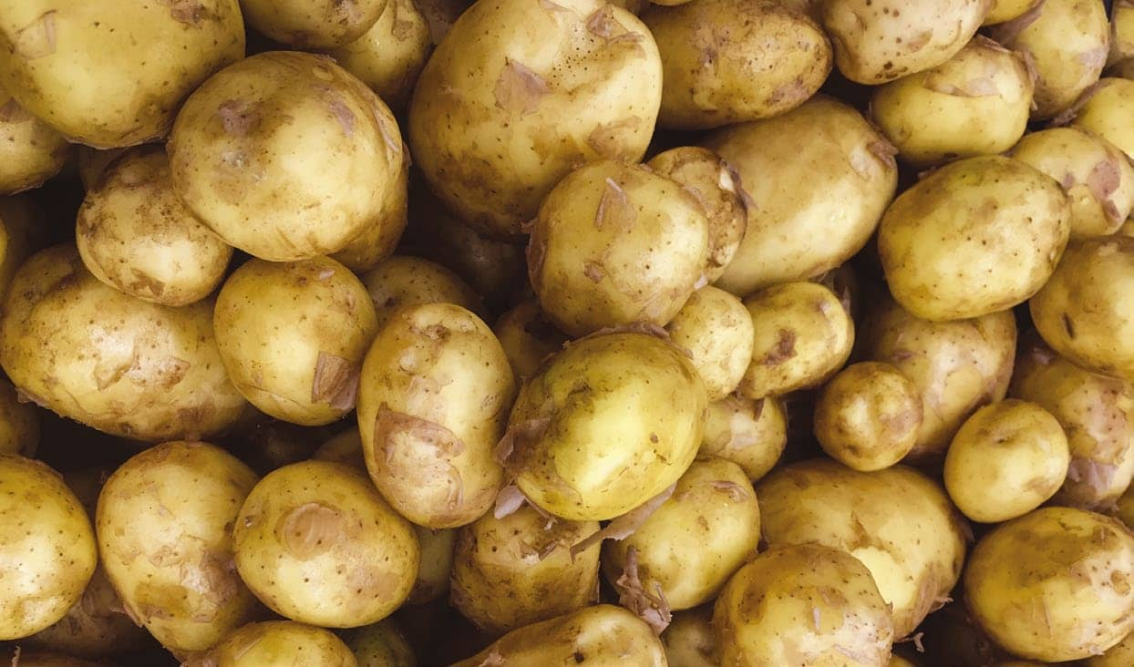 Potato tuber corky cracks caused by multiple Rhizoctonia species
