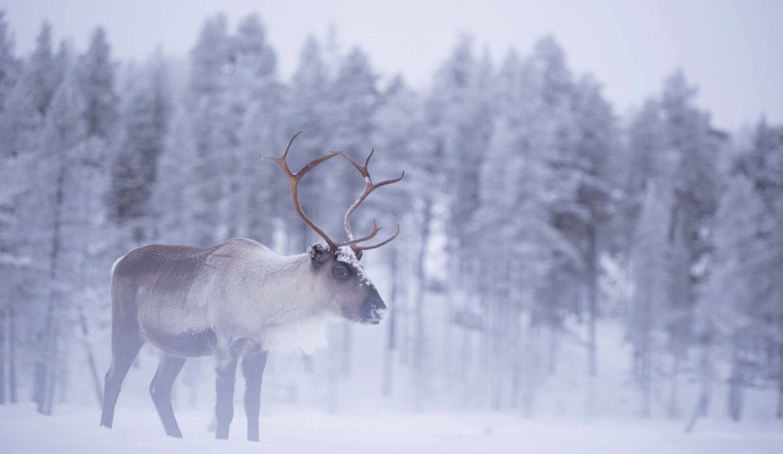 When Reindeer Roamed In Derbyshire