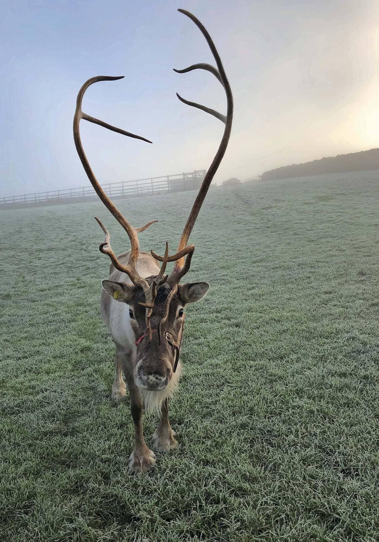 Rudolph In Lakeland