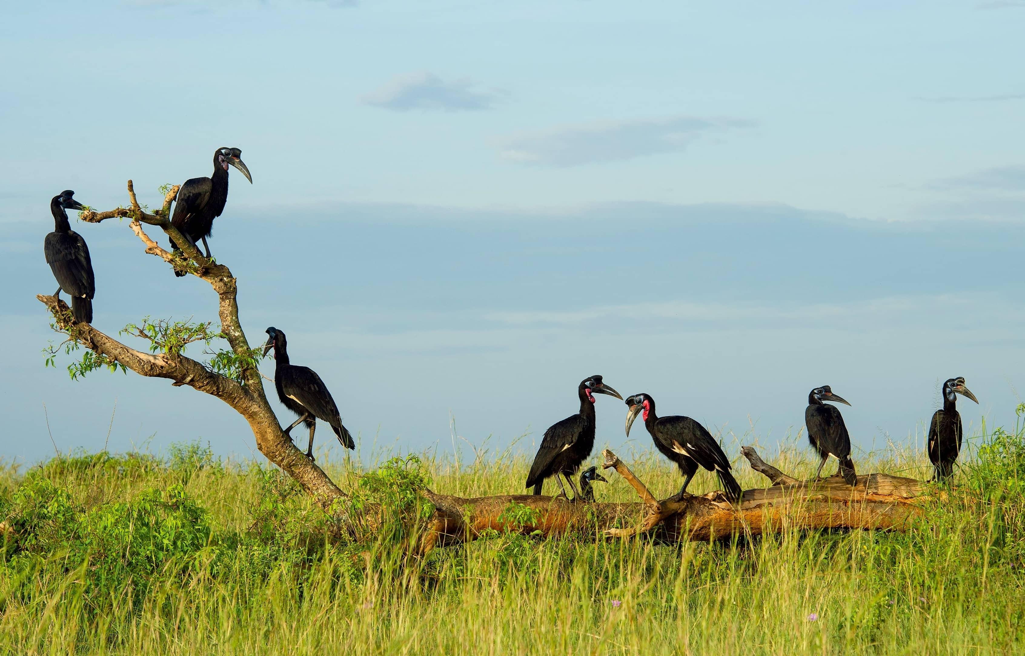 8 Of The Best Top Birding Sites In Uganda