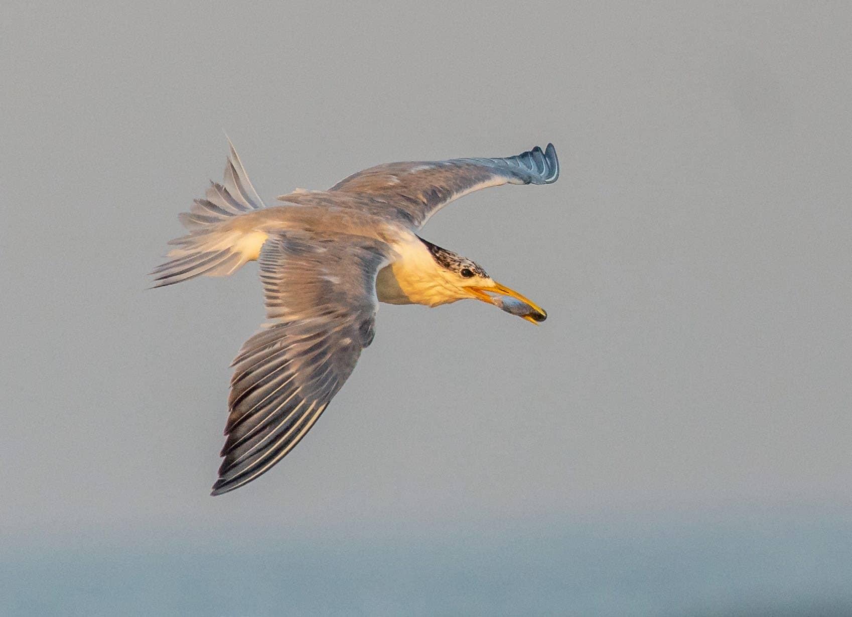 Quick fix - Sapphire Coast Birding Route