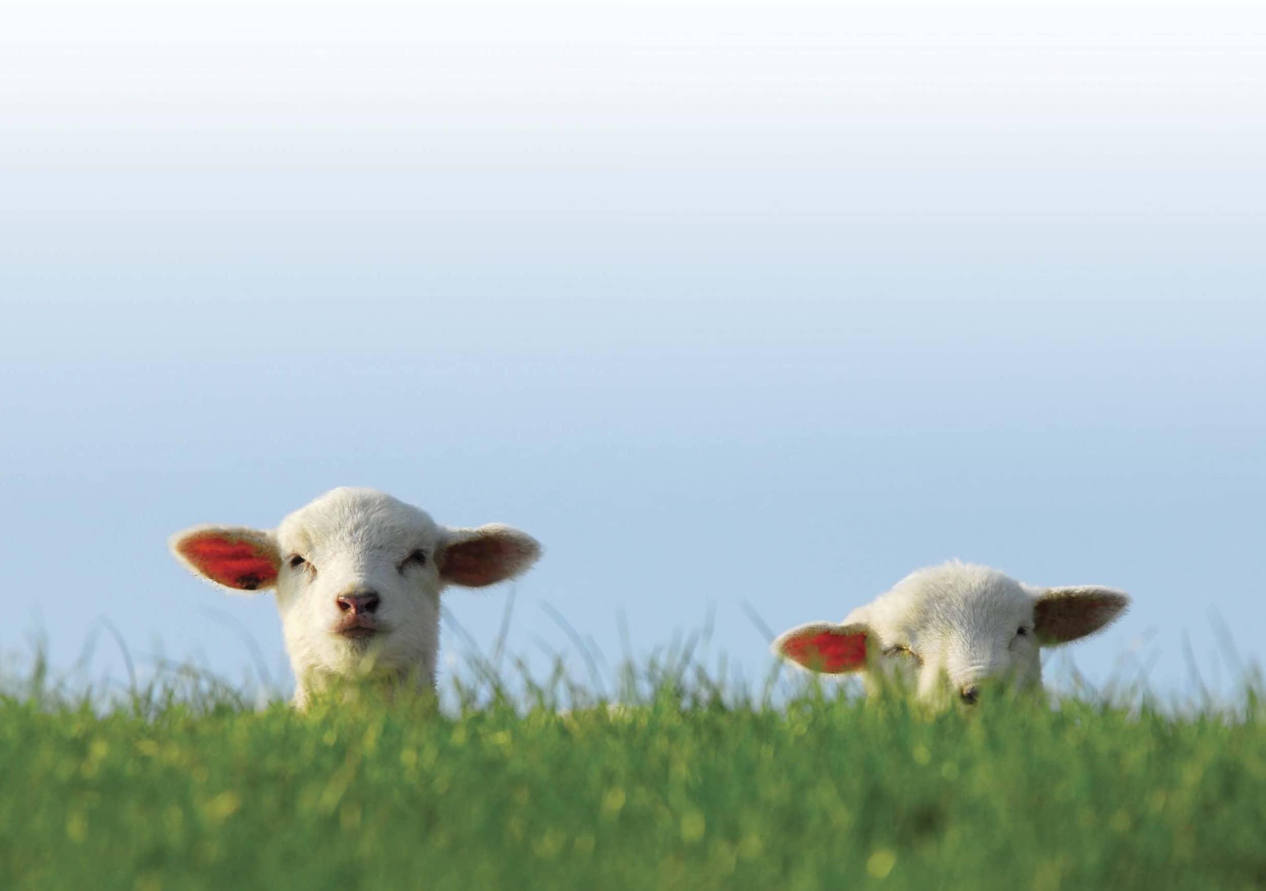 The Farming Year Spring