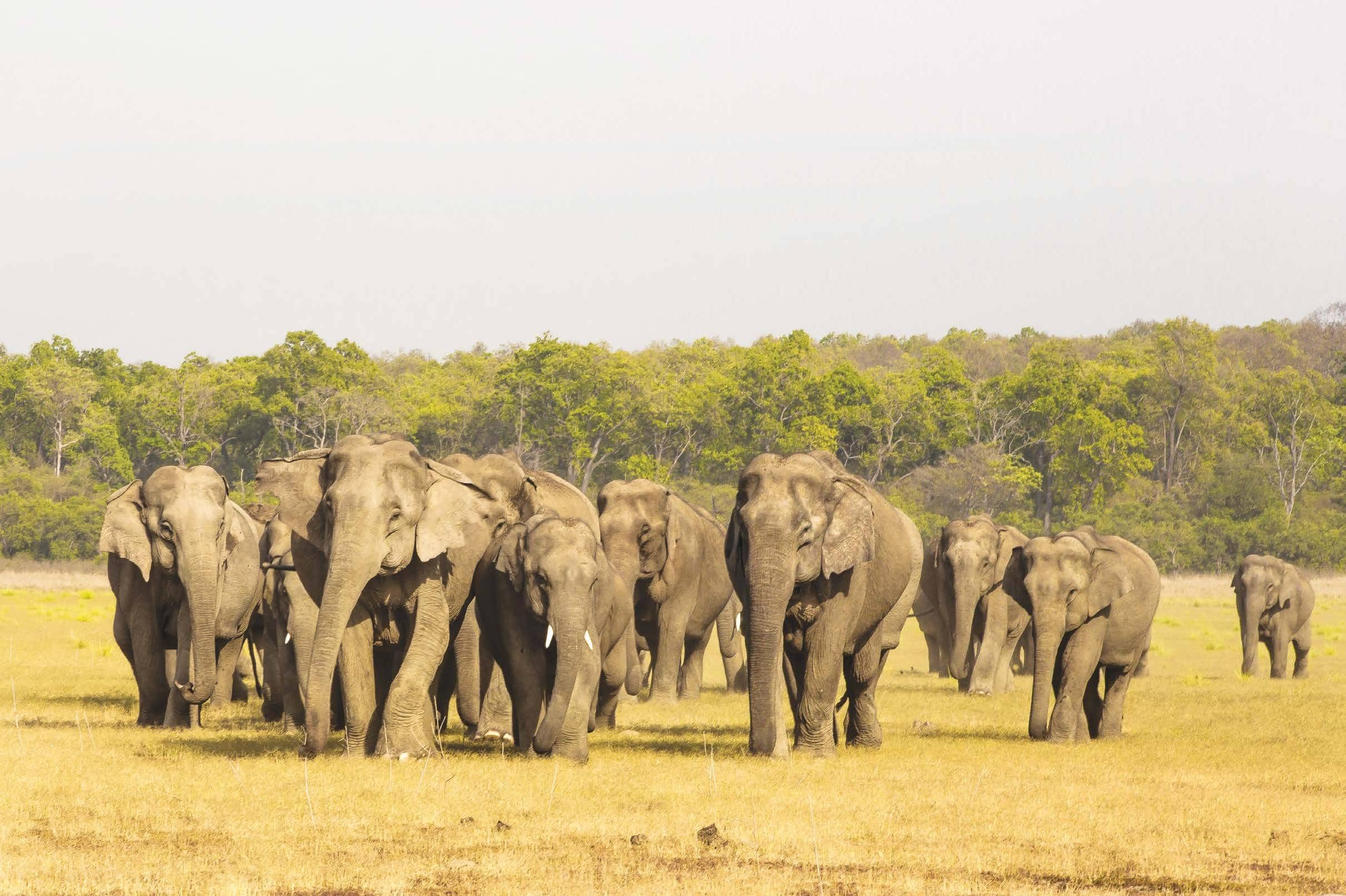 Expanding Horizons - The Wildlife Institute Of India — A Valuable Natural Resource