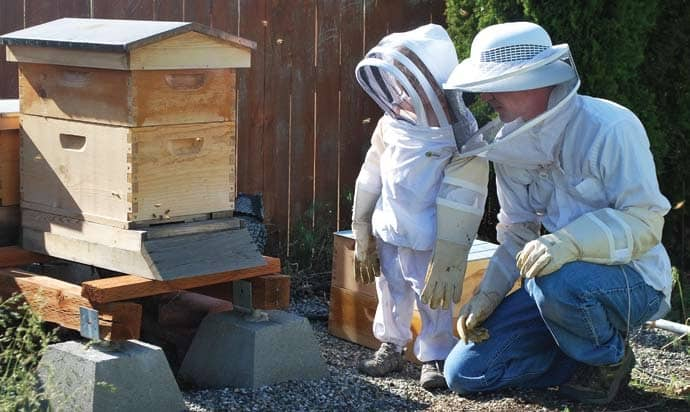 The not-so-secret lives of bees